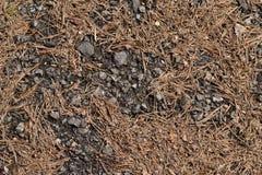 Der Weg in der Kiefernwaldbeschaffenheit, Hintergrund Stockfoto