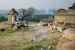 Der Weg der Stiere in der alten Stadt Lizenzfreie Stockfotografie