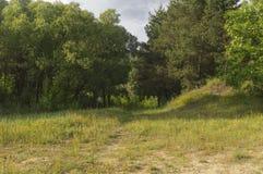 Der Weg, der zu den Wald führt Lizenzfreie Stockbilder