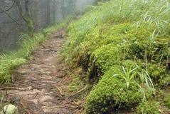 Der Weg durch den alten nebelhaften Wald, der moosig war Stockfotos