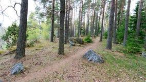 Der Weg durch den Frühlingswald geht die Kiefer umher Stockfoto