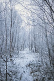 Der Weg durch den Winterpark Stockbild