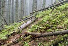 Der Weg durch die gefallenen Bäume im nebelhafter Gebirgswald Stockfotografie