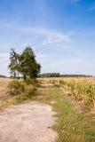 Der Weg entlang dem Getreidefeld Lizenzfreie Stockfotos