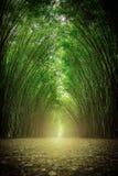 Der Weg grenzte durch zwei Seiten ohne Bambuswald an Lizenzfreie Stockfotografie