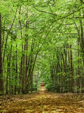 Der Weg im grünen Sommerwald Lizenzfreies Stockfoto
