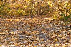 Der Weg im Herbstwald Stockbild