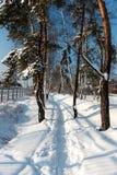 Der Weg im Schnee an einem hellen sonnigen Tag Stockbilder