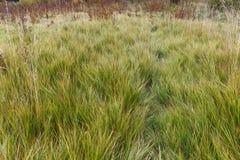Der Weg im starken Gras Lizenzfreies Stockfoto