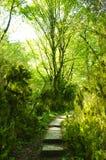 Der Weg im Wald Lizenzfreies Stockfoto