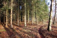 Der Weg im Wald Stockbild