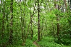 Der Weg mitten in den Bäumen des Waldes werden mit Laub verziert lizenzfreie stockbilder
