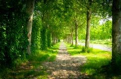 Der Weg der schattenhaften Natur lizenzfreies stockfoto