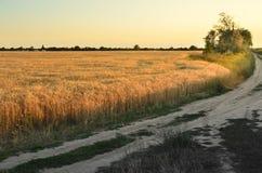 Der Weg zwischen den Feldern unter dem Sonnenuntergang Lizenzfreie Stockfotos