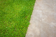 Der Wegweg im Park mit grünem Gras Stockbilder