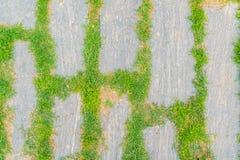 Der Wegweg im Park mit grünem Gras Stockfotos