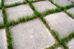 Der Wegweg im Park mit grünem Gras Stockbild