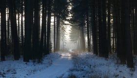 Der weiße bedeckte Schnee fuhr zwischen Kiefern Lizenzfreie Stockfotos