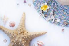 Der weiße Hintergrund auf dem Marinethema mit Muscheln, Perlen, Korallen, Seestern und Kappe Lizenzfreie Stockfotografie