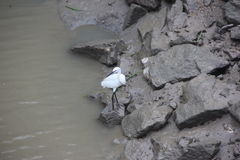 Der weiße Kran und verunreinigen Fluss Stockfotografie