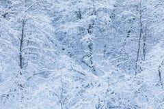 Der weiße schöne Winterhintergrund der Niederlassungen der Bäume im Wald oder im Park unter dem Schnee stockbild