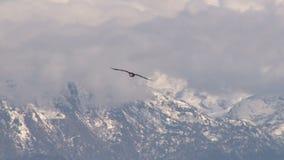 Der Weißkopfseeadler, der nahe Schnee fliegt, bedeckte Berge stock video