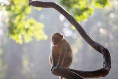 Der weibliche Affe sitzt allein auf einem Glied Lizenzfreies Stockbild
