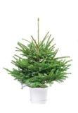 Der Weihnachtenc$pelzbaum betriebsbereit zu verzieren Lizenzfreie Stockfotografie