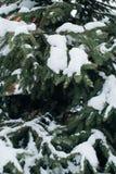 Der Weihnachtsbaum, bedeckt mit Schnee, neues Jahr, Winter ist Zeit stockbilder