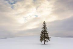 Der Weihnachtsbaum in Bie, Japan Stockfotos