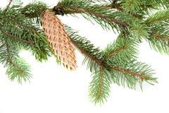 Der Weihnachtsbaum-Zweigrand über Weiß Stockfotos