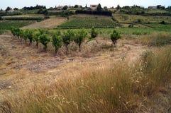 Der Weinberg und das Gras Lizenzfreie Stockbilder