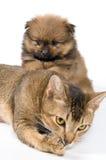 Der Welpe mit einer Katze Lizenzfreies Stockfoto