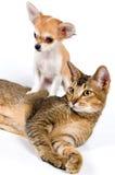 Der Welpe mit einer Katze Stockbild