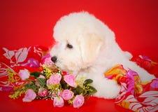 Der Welpe riecht rosa Blumen Der Kopf eines weißen Hundes im Profil Lizenzfreies Stockfoto