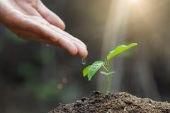 Der Weltumwelttag, männliche Hand, die Wasser zum Baum mit mit Tropfen über Grün- und Morgensonnenlichtumwelt gibt errichten lizenzfreies stockbild