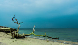 Der wilde Strand Stockfotos