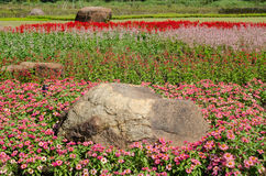 Der Wildflower ist so schön Lizenzfreies Stockfoto