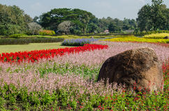 Der Wildflower ist so schön Stockfoto