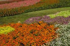 Der Wildflower ist so schön Lizenzfreies Stockbild