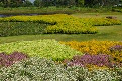 Der Wildflower ist so schön Lizenzfreie Stockfotos