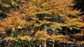 Der Wind brennt auf den Herbstbäumen durch stock video