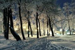 Der Winterabend im Stadtpark Lizenzfreie Stockbilder