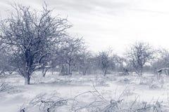 Der Wintergarten schläft Wartefrühling Stockbilder