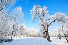 Der Winterschnee und -rauhreif szenisch stockbilder