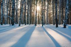Der Winterwald unter Schnee Das Holz in Sibirien im Winter Das Holz in Russland im Winter Stockfotos
