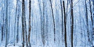 Der Winterwald vor Dämmerung lizenzfreies stockfoto