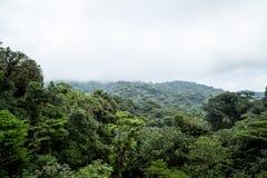 Der Wolkenwald in Monteverde Stockfotografie