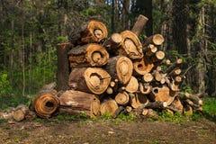 Der Woodpile auf Rand des Waldes Stockfotos