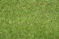 Der wunderbare Hintergrund des grünen Grases Stockbild